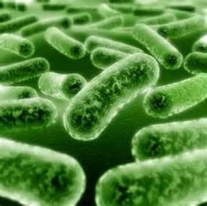 Развитие простатита происходит на фоне проникновения инфекции в ткани предстательной железы из органов мочеполовой системы