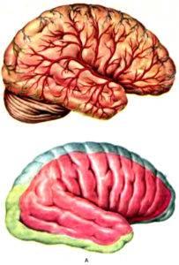 Нарушение кровоснабжения мозга