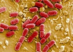 Распространения инфекции
