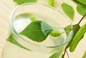 Отвар из листьев белой березы