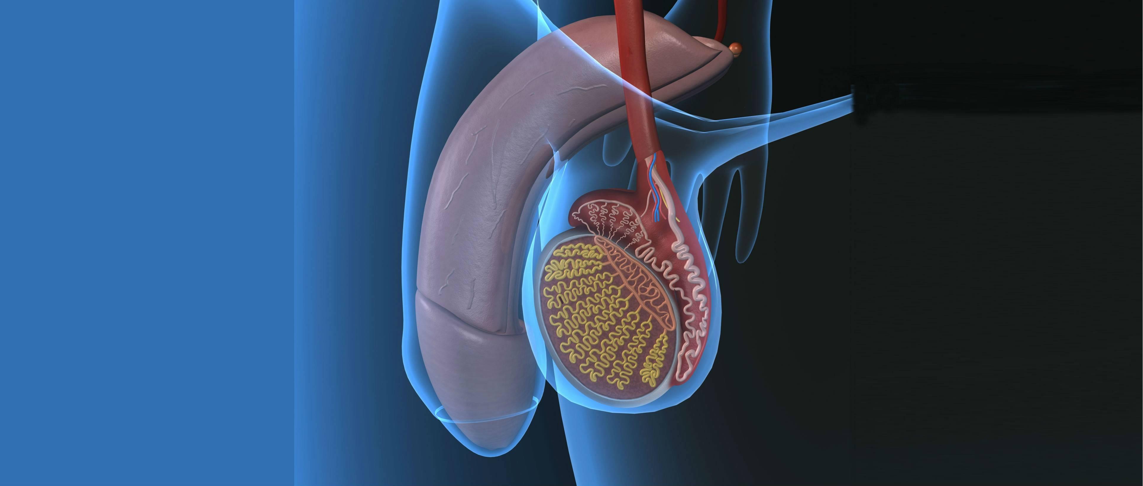 Могут ли болеть яйца у мужчин от простатита комплексный препарат от простатита
