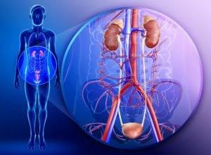 Воспалительные процессы мочеполовой системы